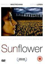 Movie Sunflower
