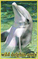 National Geographic Wild Dolphin Army