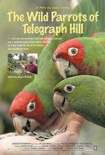 Movie The Wild Parrots of Telegraph Hill