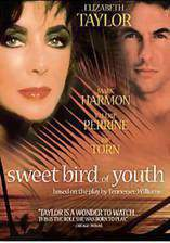 Movie Sweet Bird of Youth