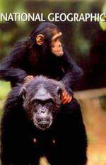 Movie Last of the Wild Chimps
